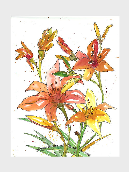 Day Lily • Watercolor Print