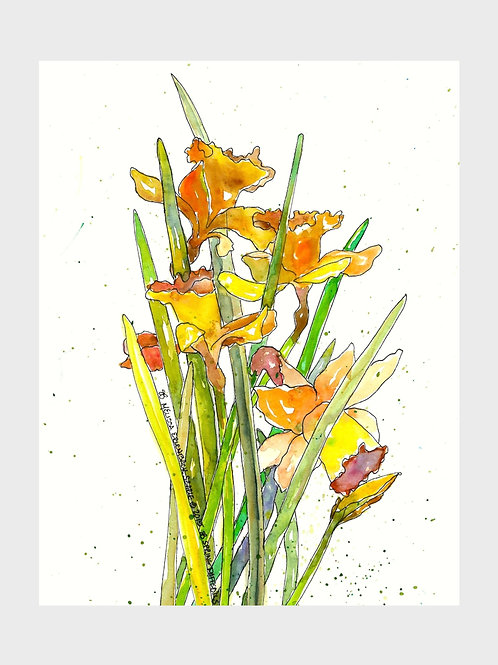 Spring Daffodils • Watercolor Print
