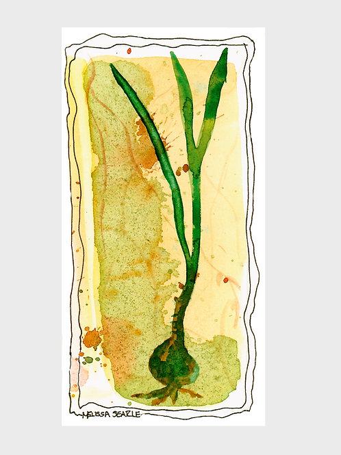Scallion • Watercolor Print