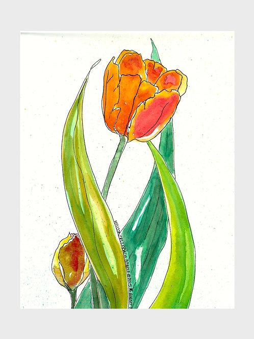 Sunset Tulips • Watercolor Print
