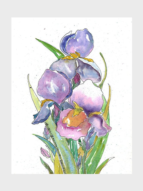 Siberian Iris Trio •  Watercolor Print
