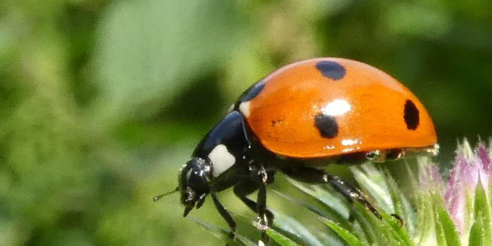 Open atelier Inhaalles   Ladybug
