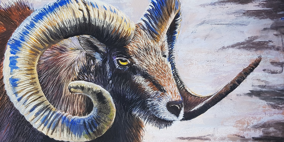 Draw and Paint Animal *nieuw*