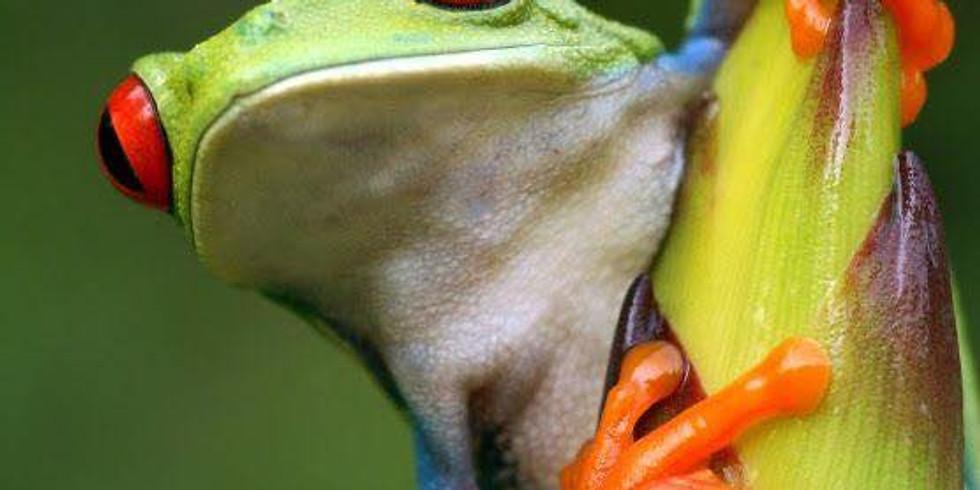 Open atelier Inhaalles froggy