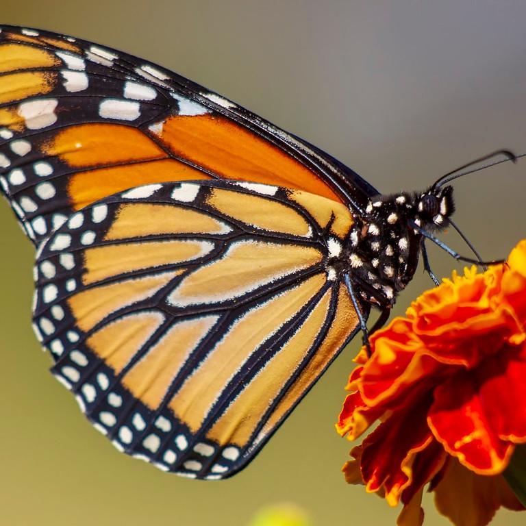 Open atelier Inhaalles  Butterfly