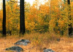 Meadow Edge in Autumn