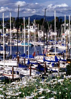 Daisies at Harbor