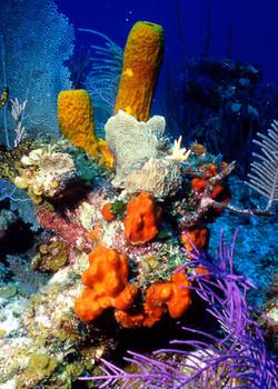 Underwater Village.jpg