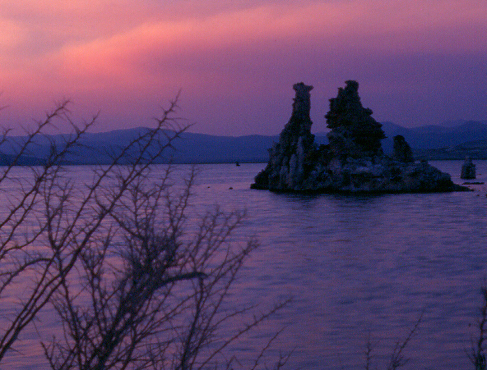 Bush and Tufa Sunset