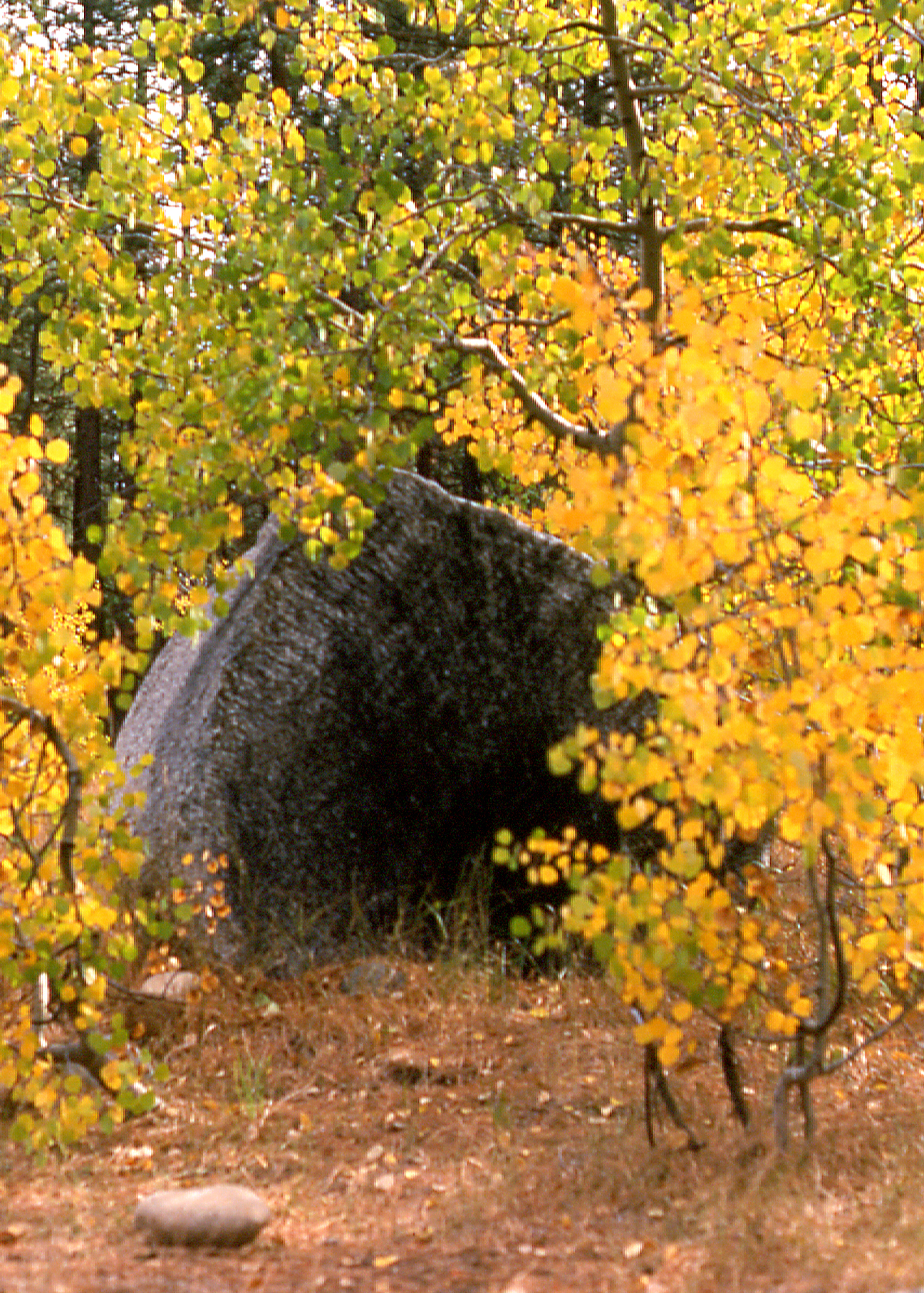 Boulder and Fall Leaves