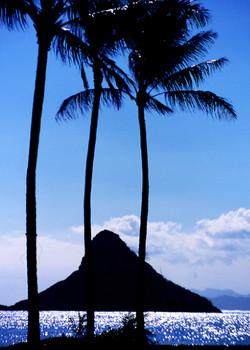 Three Palms and Island