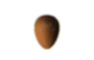 new egg no bgd_edited.png