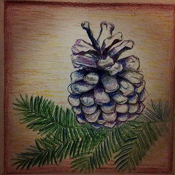 Pinecone Sketch.jpg