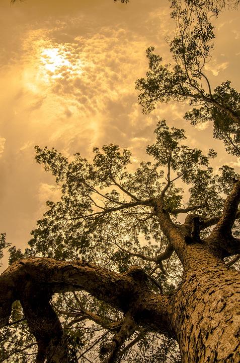 Gratuit_tree-428087_960_720