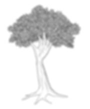Permaculture chirologie védique Arbre-main retraite design mieux-être