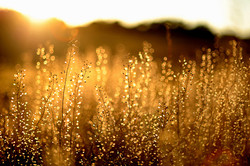 nature-light-golden-hours-photography-4