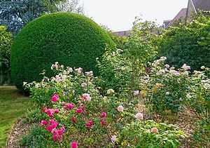 Topiary Hedge Trimming