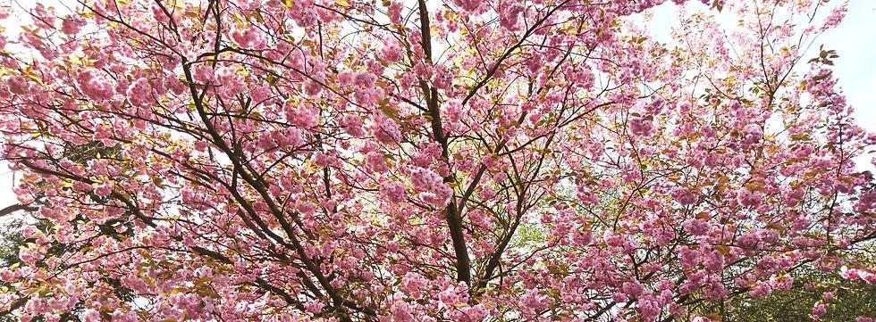 Tree Pruning Beaconsfield