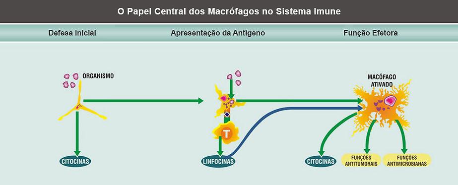 macrófagos3.jpg