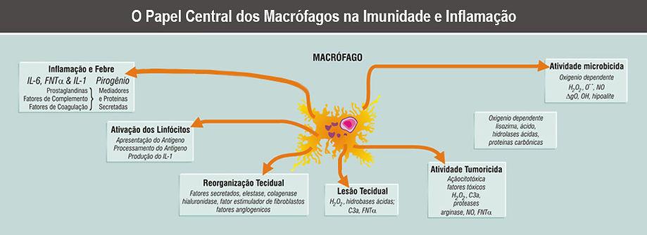 macrófagos4.jpg