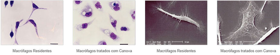 macrófagos.jpg