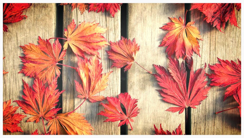 Let Michiana Deck Builders replace your deck this fall.