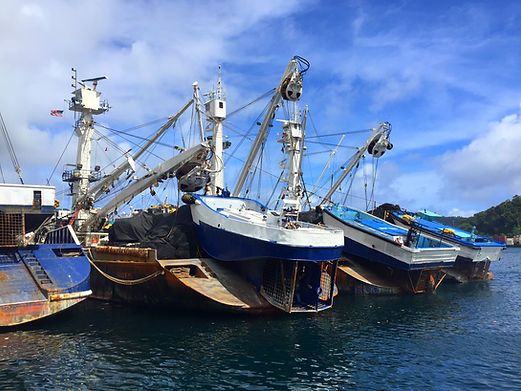 Docked fishing boats