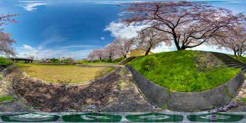 岐阜県瑞穂市の桜
