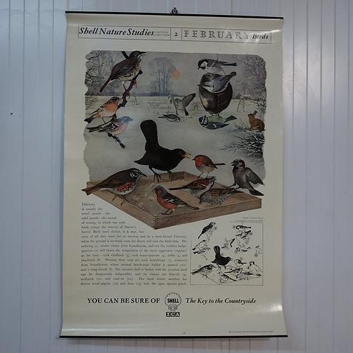 shell poster, original shell poster, lithographic print, 1950s, shell, bird watching, shell calender