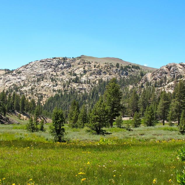 Sonora Pass - Mountain Meadow