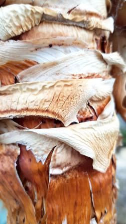 cactus bark.jpg