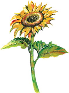 Sunflower small MB size.png