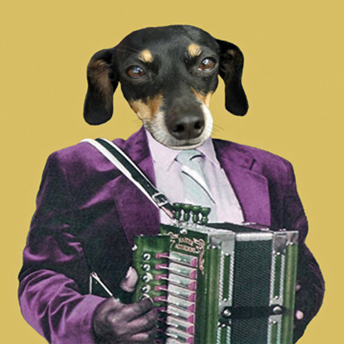 Accordion Hound