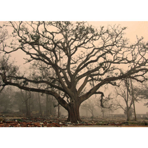 Biloxi Tree