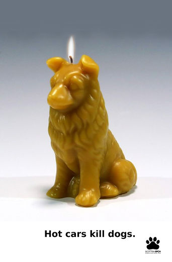 sspca yellow dog.jpg