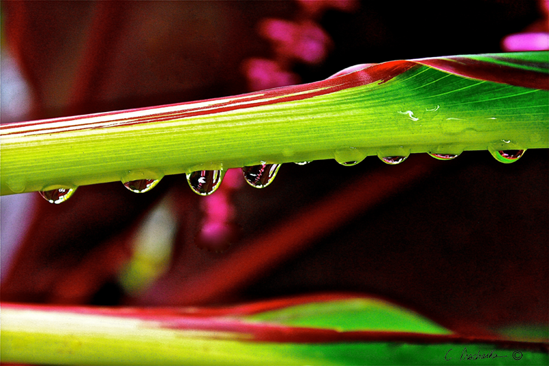 Clingy Crystal Droplets PB00109