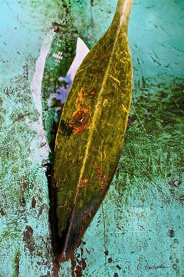 Algae Swamp Paddle   CP00042