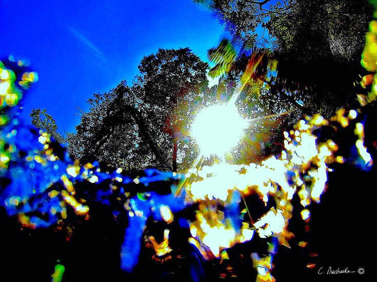 The Event Horizon WM00028