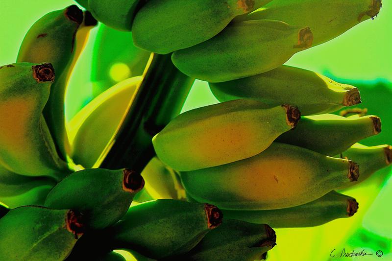 Real Green Bananas PB00102