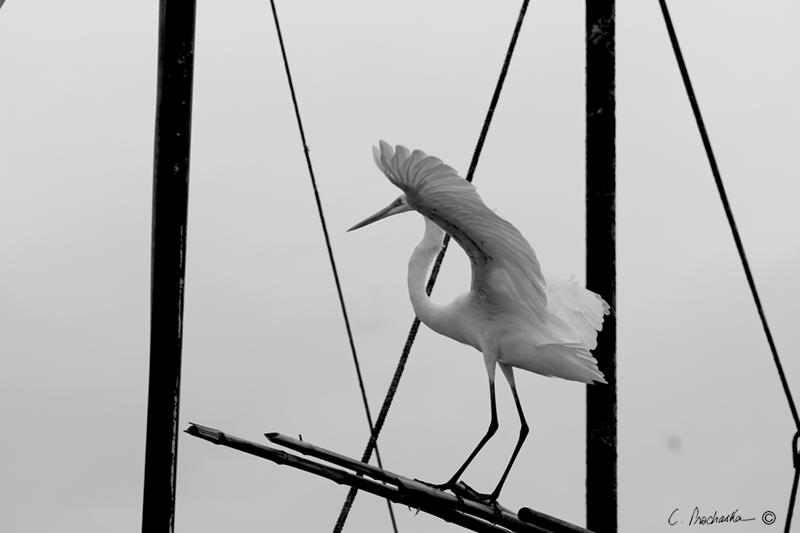 Aerial Crane Posturing  FM00505