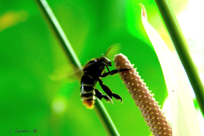 Bees Knees no Birds  PB00131