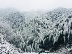 Ice Bamboo Ocean