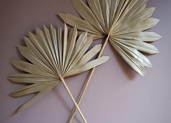 Torkat palmblad