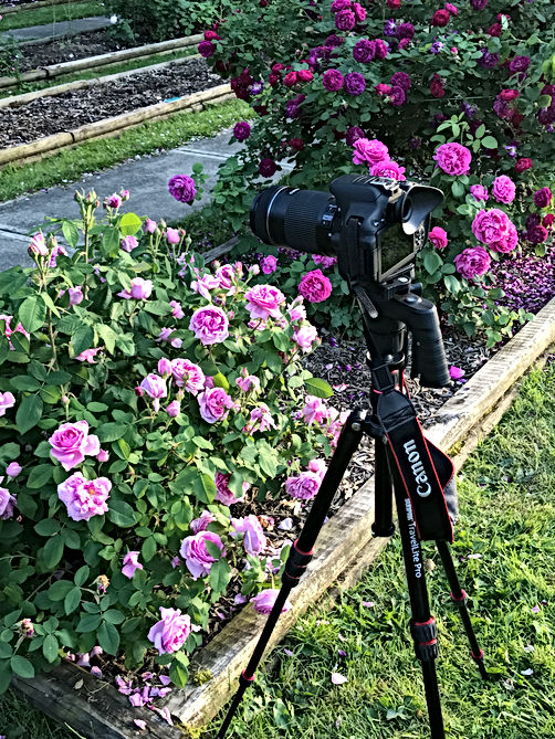 CANON on Tripod.JPG