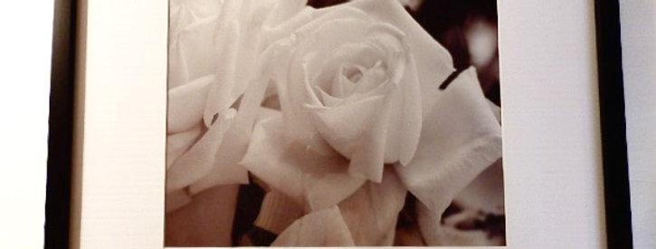"""White Roses 16X20"""""""