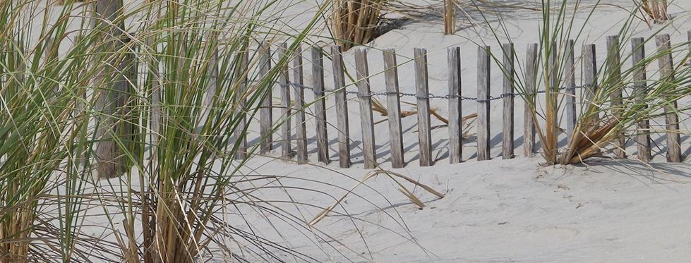 Photographic Print: Sea Grass & Fence