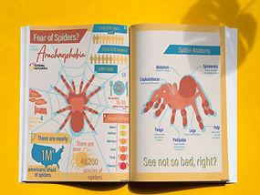 SpiderInfographic2.jpg