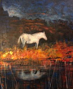 Lone horse before dawn