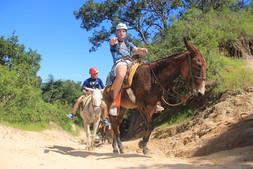 Jackson Montgomery on Mule