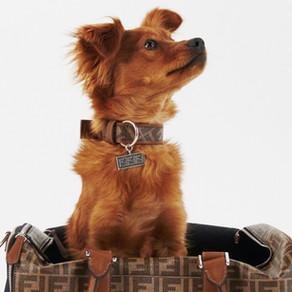 當家中的寵物穿上了FENDI寵物系列/Get these FENDI pet accessories before your pet leaving you!